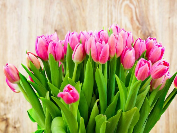 Holidays___International_Womens_Day_Tenderly_pink_tulips_in_a_bouquet_on_March_8_097093_