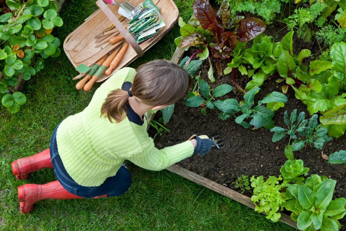 Чего сажают в саду