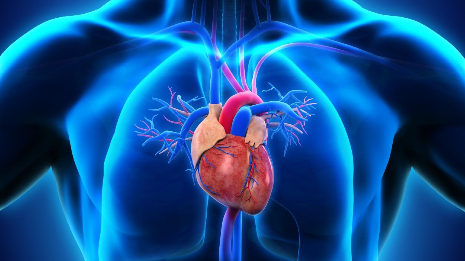 serdce-zdorovie